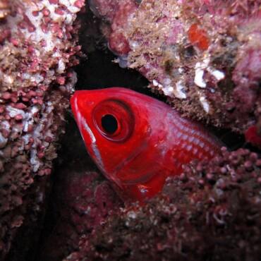 galeria-agua-viva-mergulho (3)