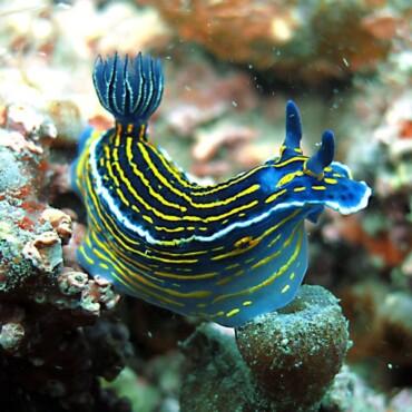 galeria-agua-viva-mergulho (5)